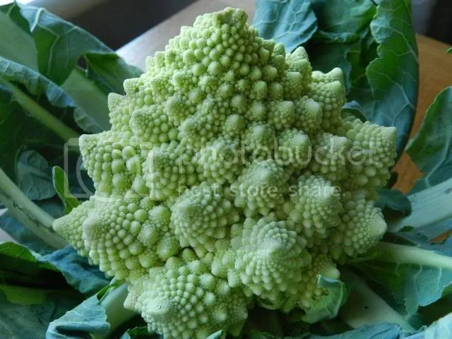 Romanesco cauliflower photo DSCN0495.jpg