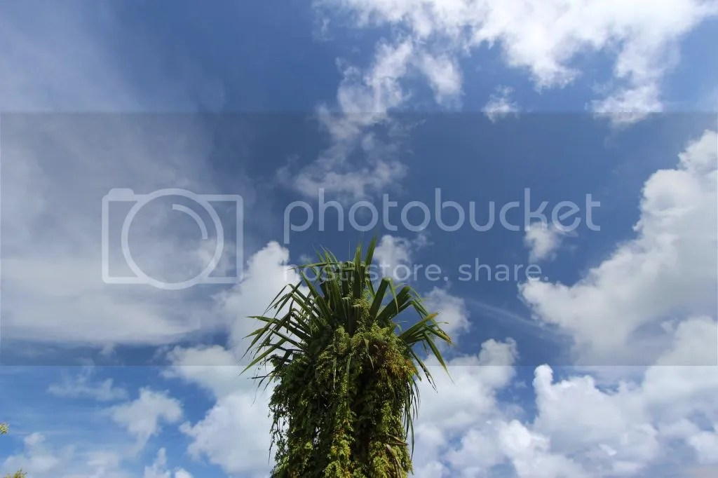 photo IMG_5722_zpse9491b1d.jpg