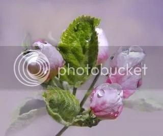 photo 378389_274255939293199_172290899489704_898051_1181019134_n.jpg