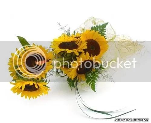 photo Buchet_Floarea_Soarelui_big.jpg