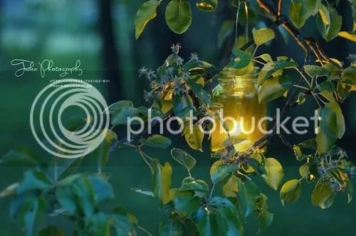 photo a_fairy_light_large.jpg