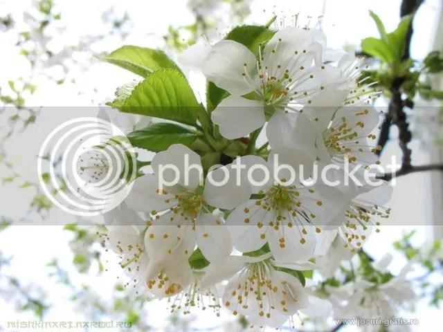 photo flori-de-cires.jpg