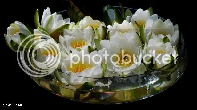 photo lotus000344vipics.jpg