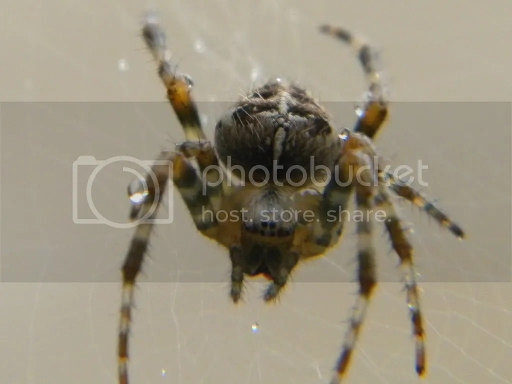 spiders photo: Spiders Eyes RSCN0784.jpg