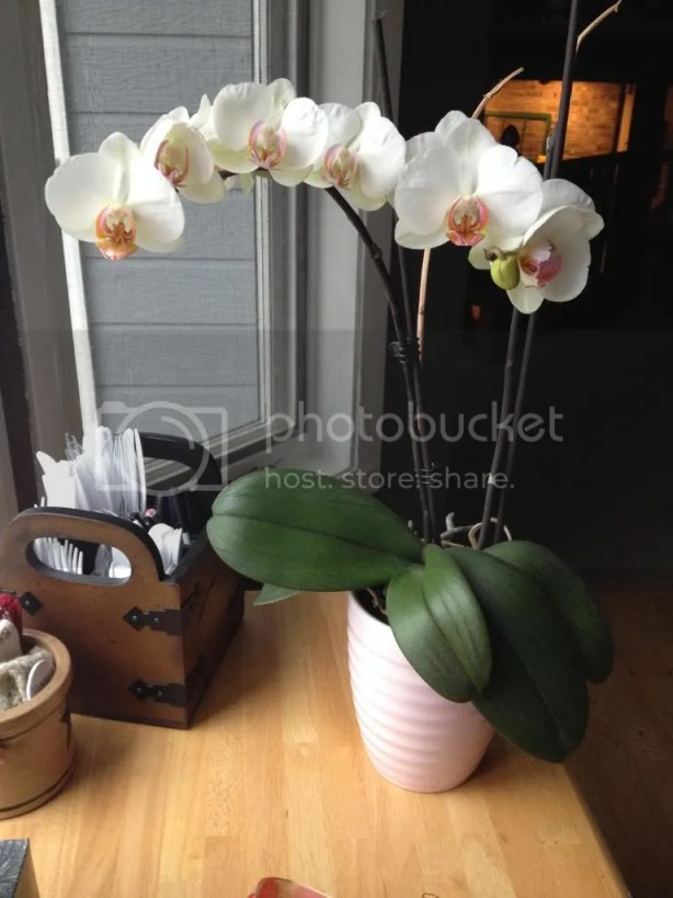 on the orchid that has been telling my story | girlwithblog.com