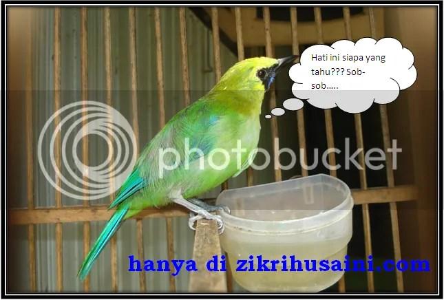 burungdalamsangkar.png Burung, burng dalam sangkar, gambar burung, burung yang ingin bebas, sajak aku seekor burung, sajak aku burung yang ingin bebas
