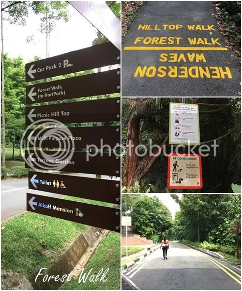 photo forest walk_zpsq9aodfke.jpg
