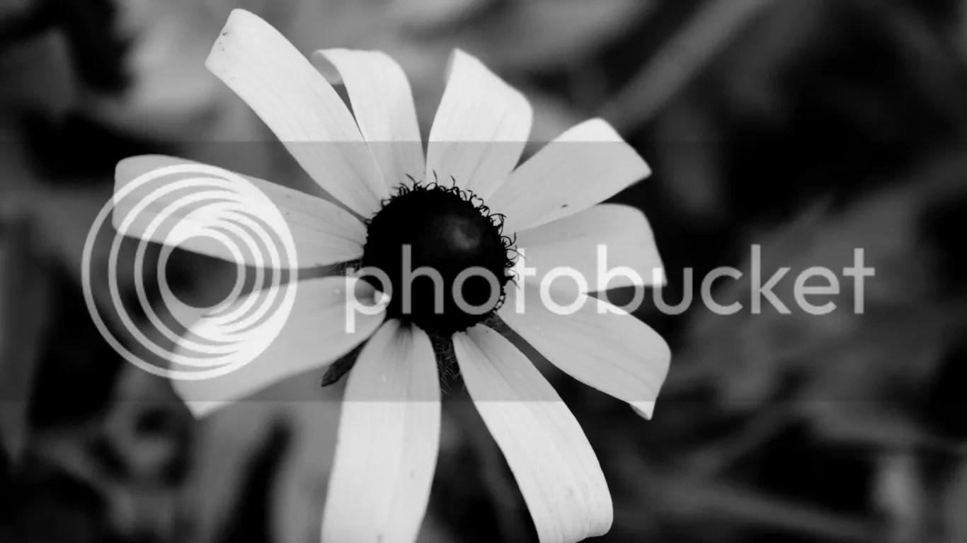 siyah ve beyaz fotoğraf kağıdı