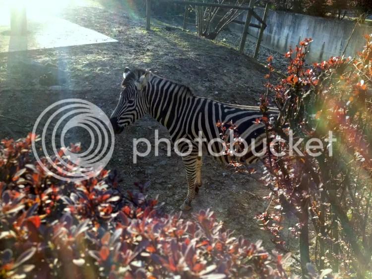 photo Zoo.jpg