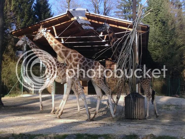 photo Zoo2.jpg