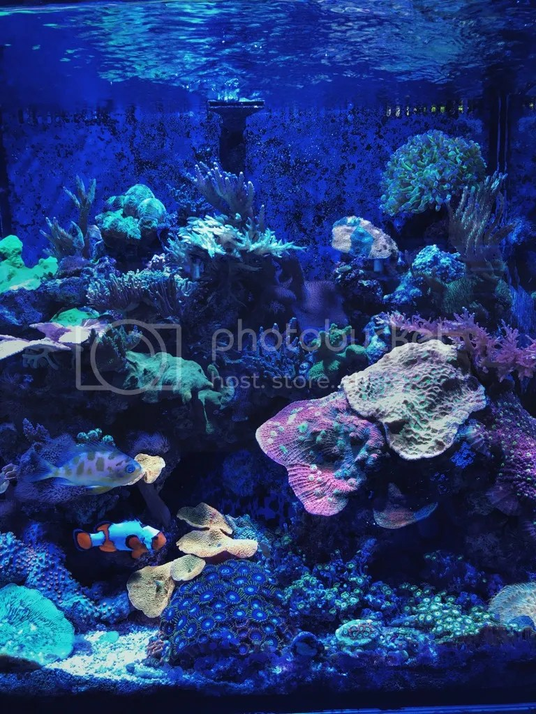 Nano Reef with clownfish Neptune Aquatics.jpg