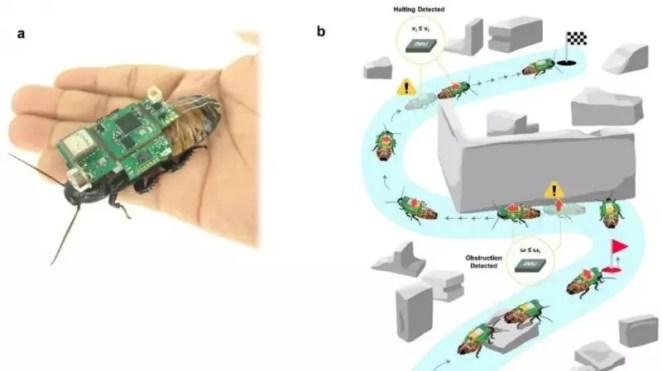 Arama-kurtarma görevlerinde hamam böceği kullanılacak 13