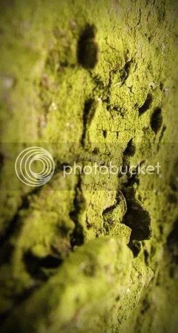 Existencia Verde