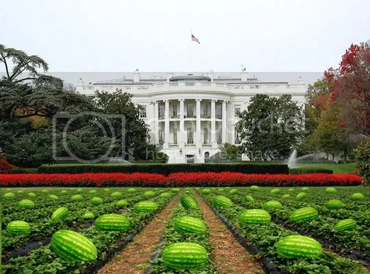 Whitehouse Watermelon
