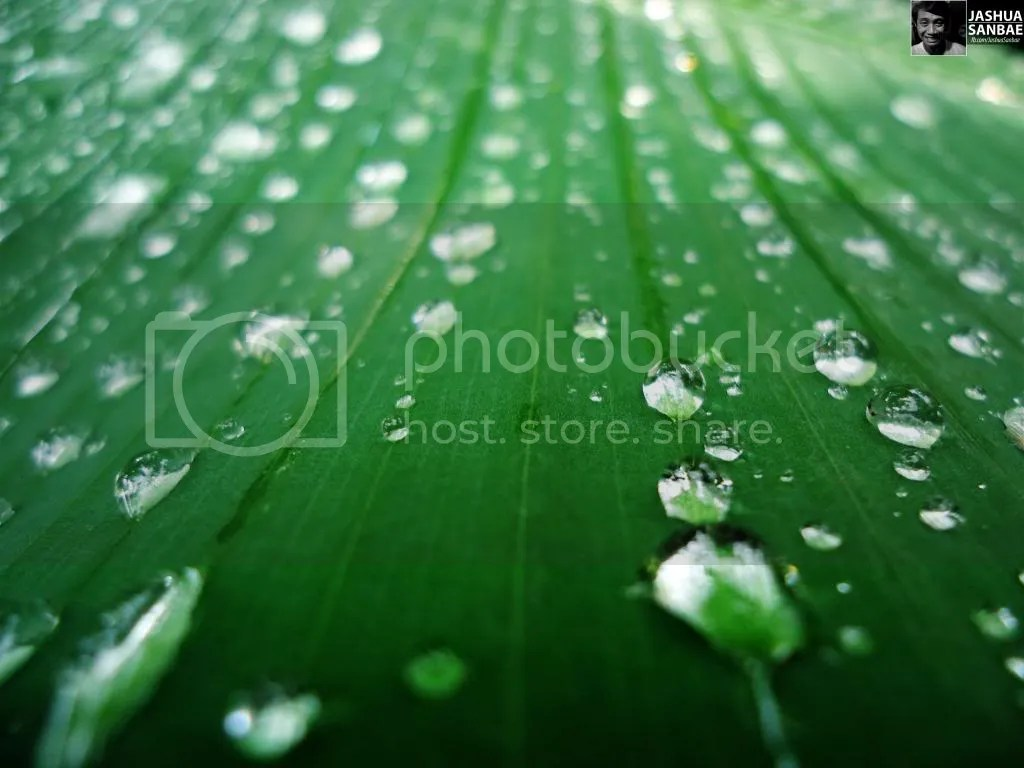 Banana Leaf with Droplets