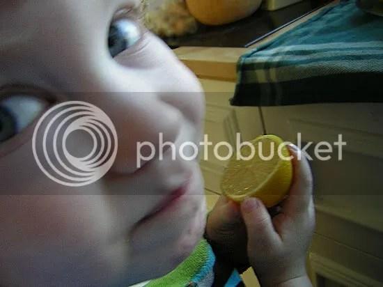 The lemon snatcher caught on film
