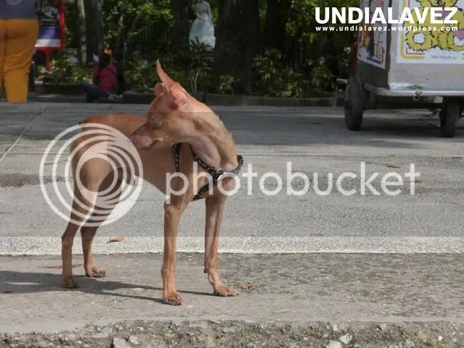 Perro en Bellas Artes