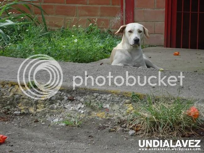 Perro en Lídice