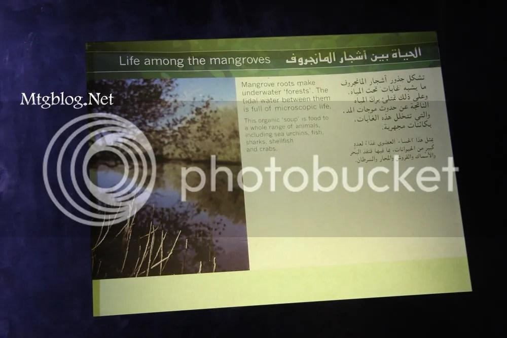 mangrof2