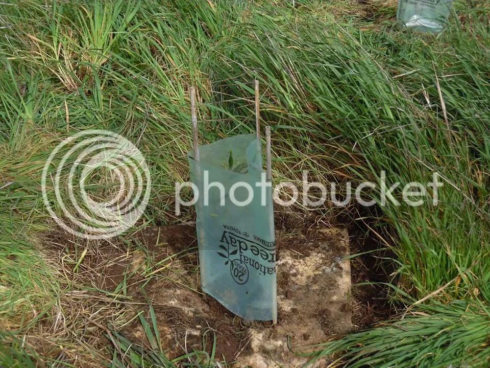 photo minerresttreeplanting2.jpg