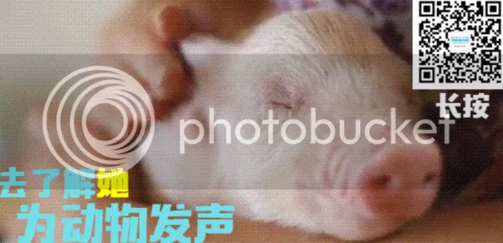 photo Screen Shot 2016-06-13 at 3.46.25 PM_zpsgjoofqgn.png