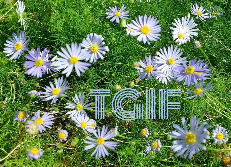 TGIF Flowers