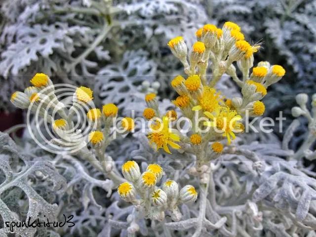 Yellow Flora Macro Photography