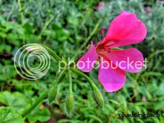 Flora Macro
