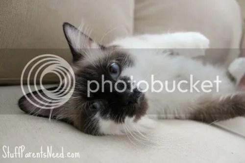 photo freshstepcats5_zps58ff35af.jpg