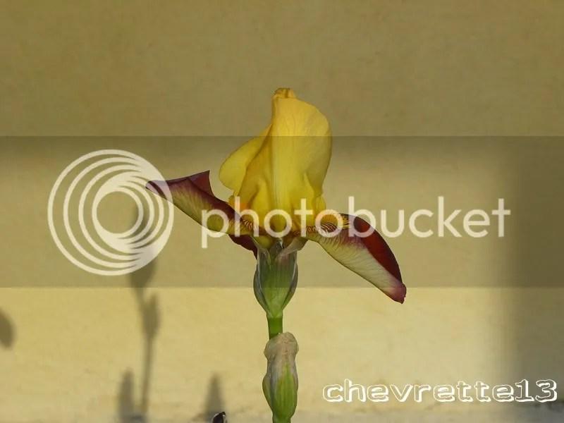 https://i2.wp.com/i1252.photobucket.com/albums/hh578/chevrette13/communaut/DSCN0068Copier_zpsed367036.jpg