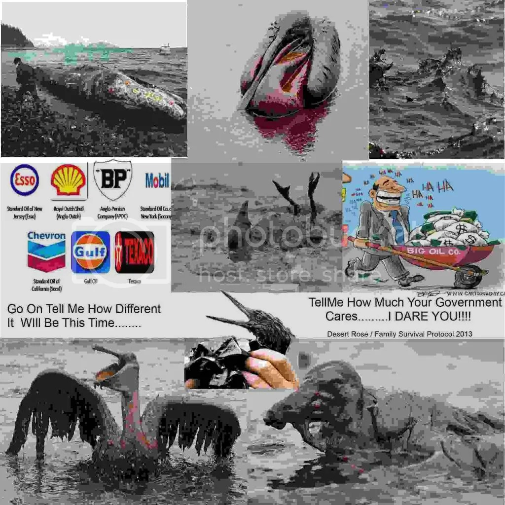 Oil Spill Collage photo OilSPillCOllage_zps91d122a3.jpg