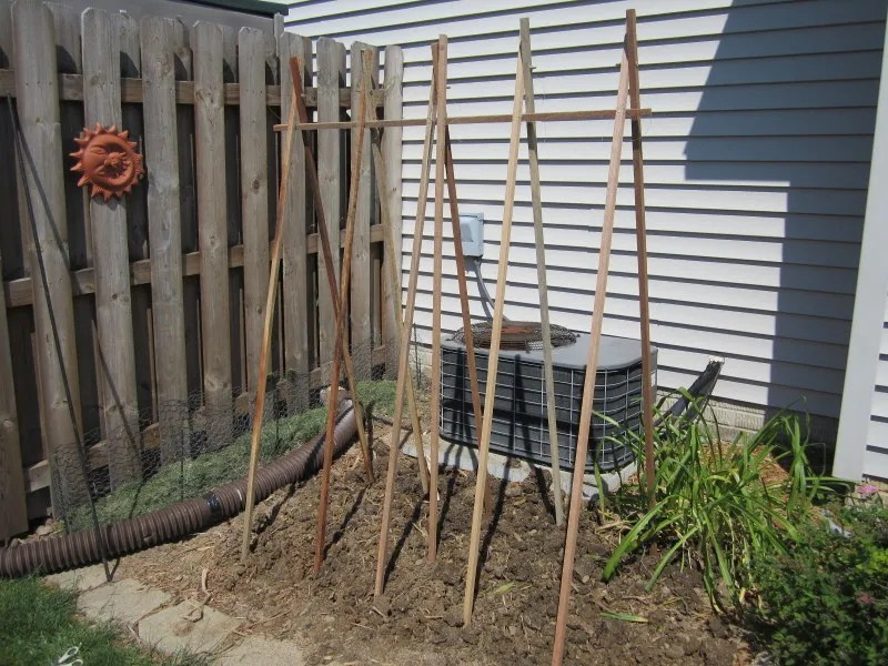 Simple Trellis for Veggies / MyUrbanGardenOasis