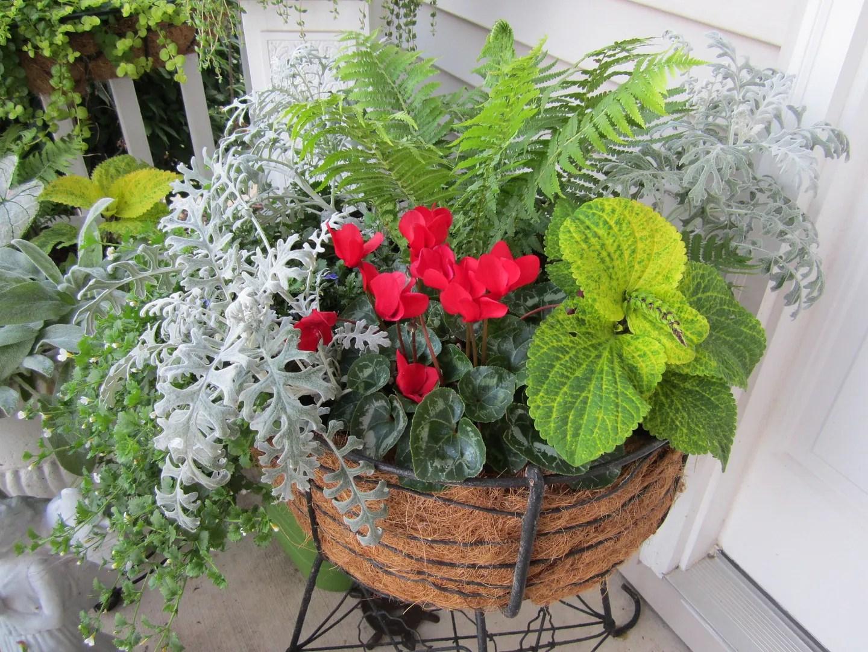 Flower Pots on a Budget/Final Harvest / UrbanGardenOasis