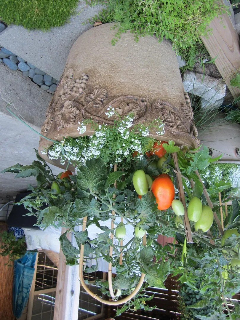 How to Fill Flower Pots on a Budget/The Final Harvest / MyUrbanGardenOasis