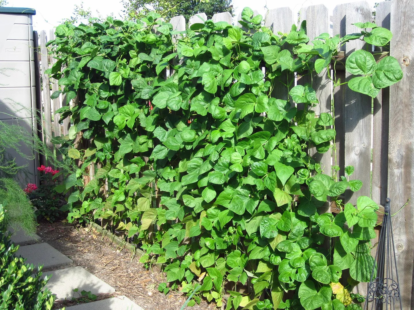 How to Grow Veggies on a Privacy Fence / MyUrbanGardenOasis