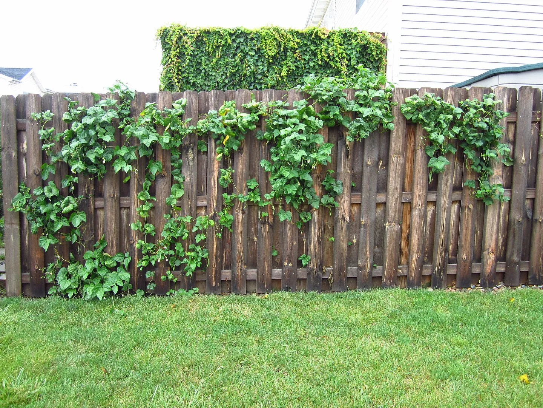 How to Grow Veggies on a Privacy Fence / MyUrbanGardenOasis
