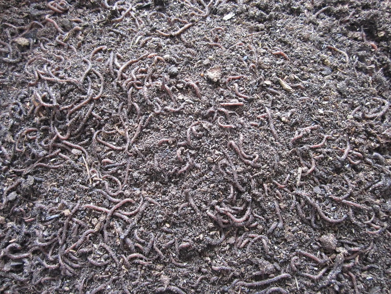 Indoor Composting With Worms / MyUrbanGardenOasis