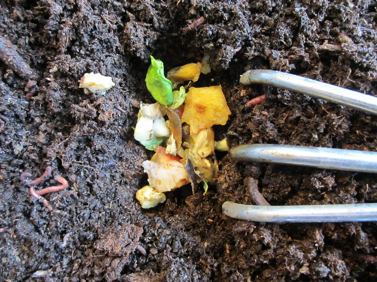 Indoor Composting With Worms / MyUrbanGardenOasis