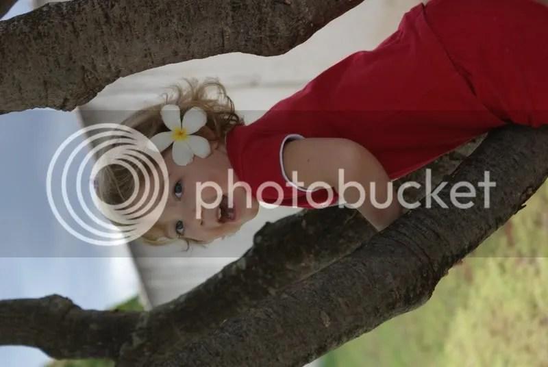 Climbing the plumeria tree