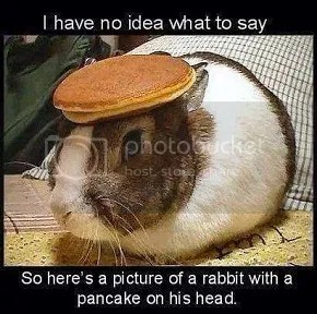 Rabbit with a pancake on his head image