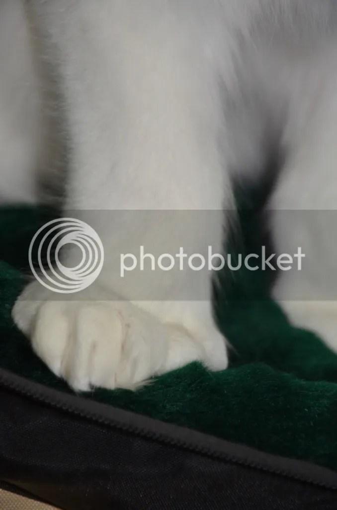 photo CatShowfolder2122_zpsf0f91ea8.jpg