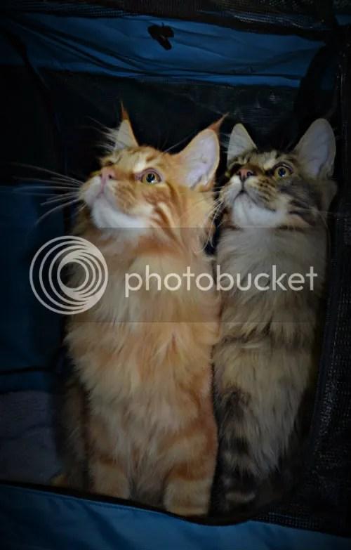 CatShowfolder2150_zps71819f84