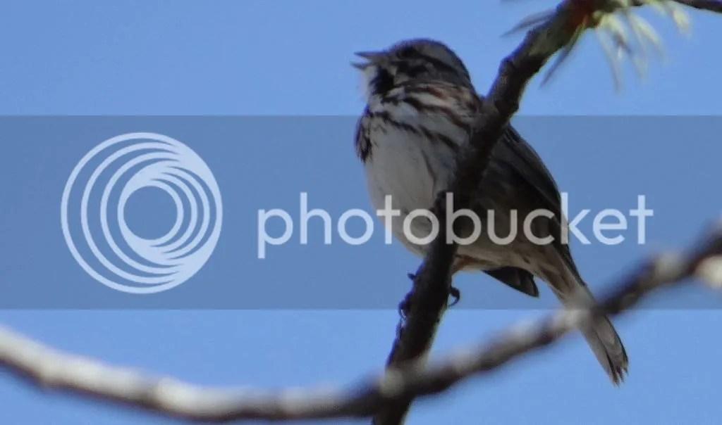 photo DSC00520.jpg