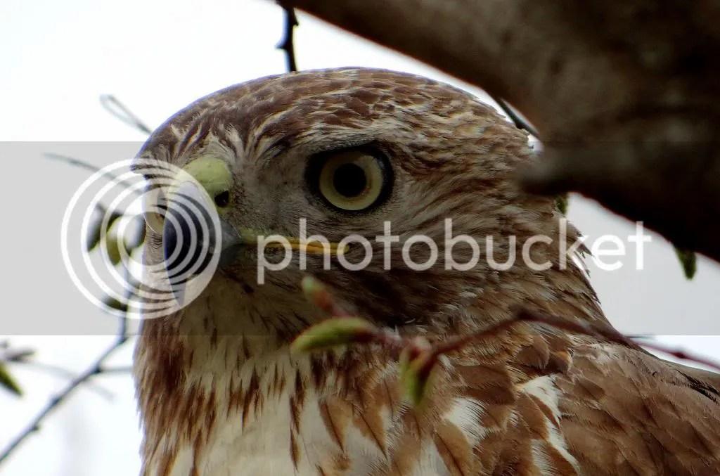 5 r t hawk eyeball  fp 070413 photo DSC03794.jpg
