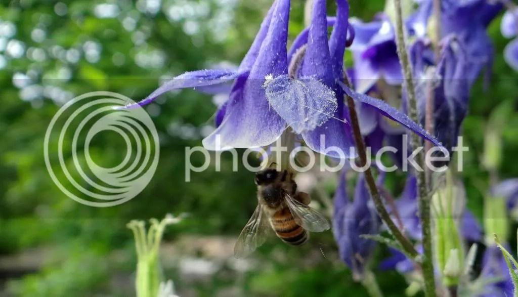 5 Bee STL 180513 photo DSC06962.jpg