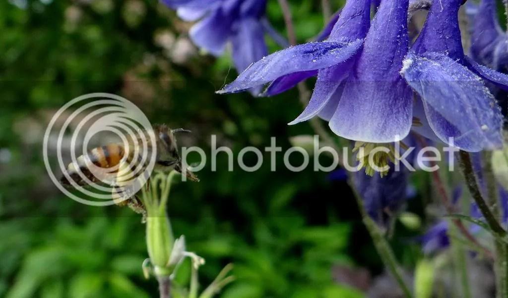 6 Bee STL 180513 photo DSC06966.jpg