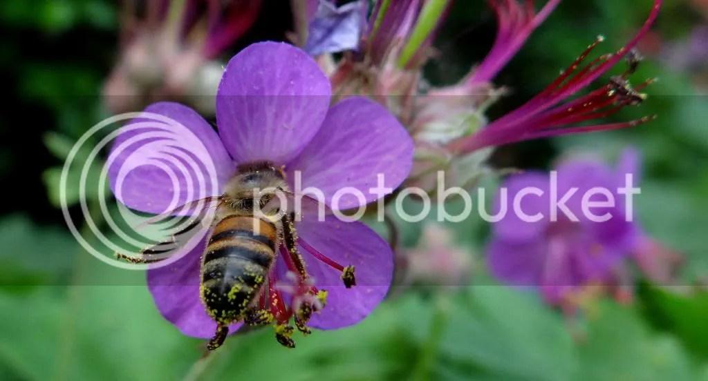 11 Bee STL 180513 photo DSC06973.jpg