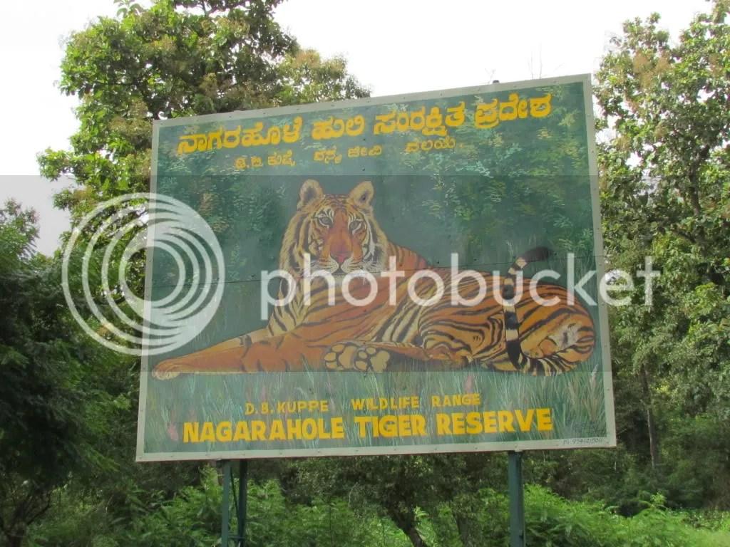 board tiger dhanush wldlfe pntr 040812 kbni