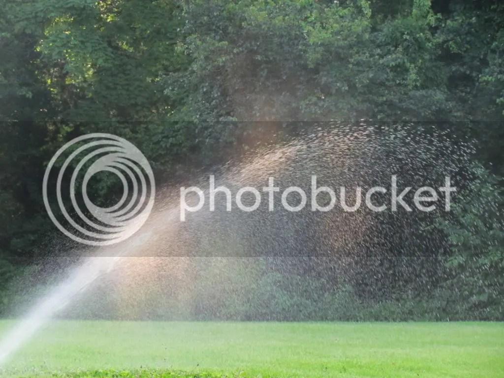 6 sprinkler 130512