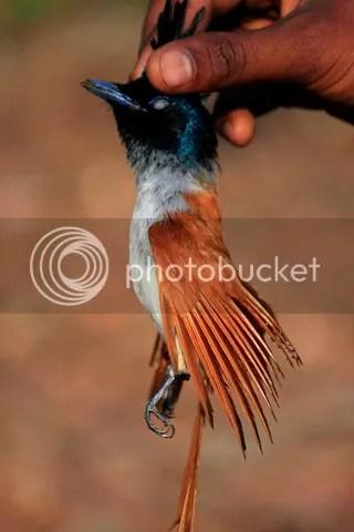 apk killed at btrfly pk 020313 photo apf.jpg